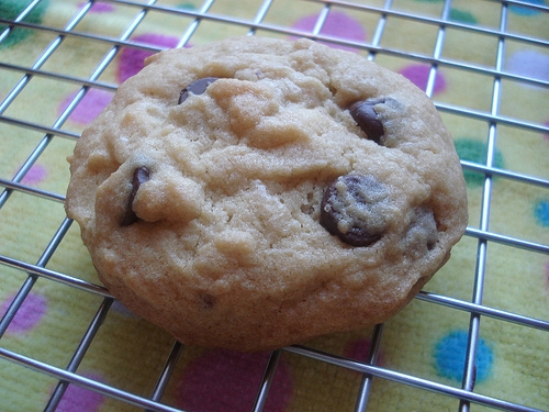 x chocolate chip