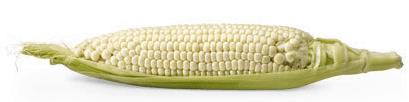 corn24