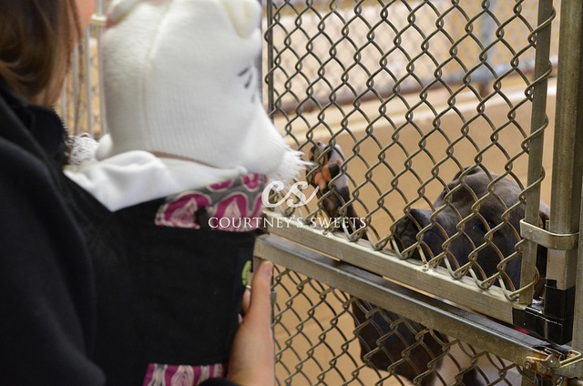 Bergen County Animal Shelter
