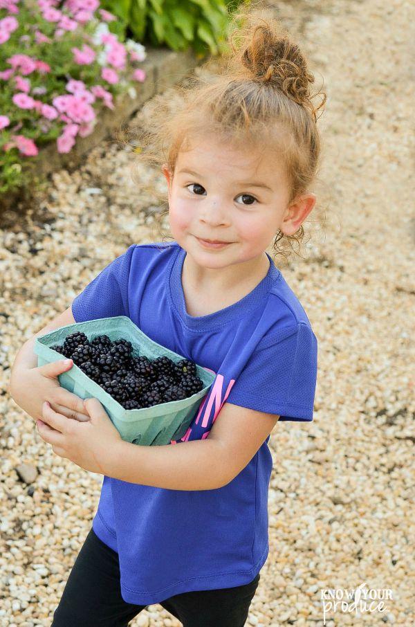 blackberry picking vonthuns farm