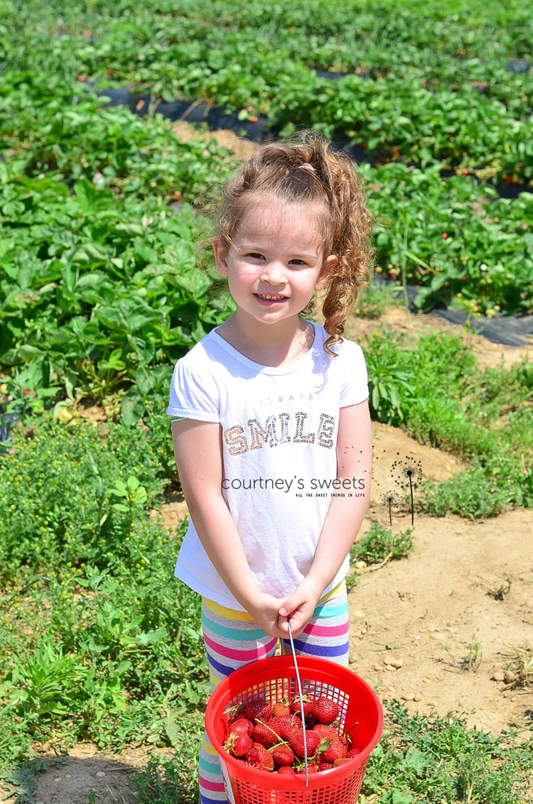 Family Strawberry Picking, More Quality Time, Less Screen Time