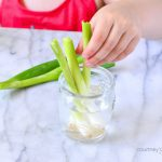 How To Grow Green Onions from Scraps